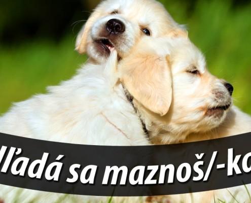 maznajúce sa šteňatá