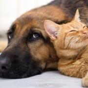 pes a mačka sa túlia spolu