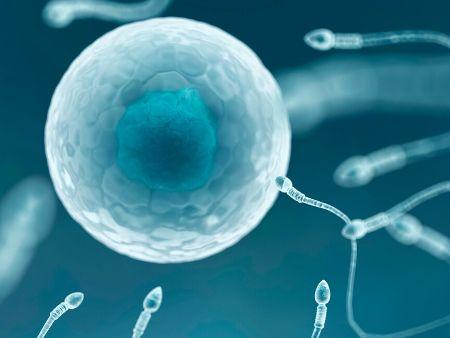 spermie smerujúce k vajíčku
