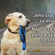 verný pes